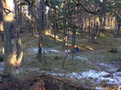 Skogen är en avstressande miljö