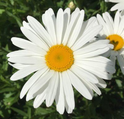 bild på blomma