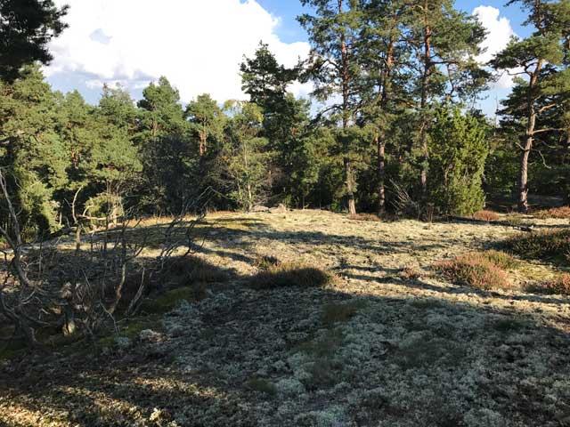 Den fina naturen på Balsberget.