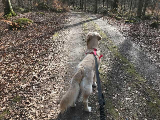 Löpning med hund på Balsberget