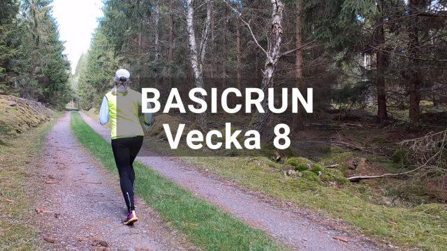 Basicrun löpträningspass vecka 8